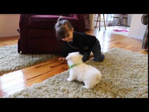 Charlie Charming Little MalShi Boy!