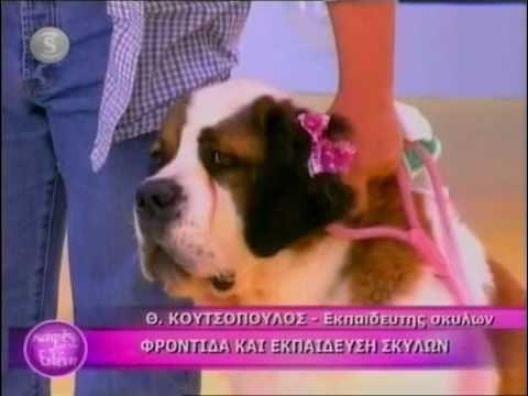Φροντίδα και εκπαίδευση σκύλων