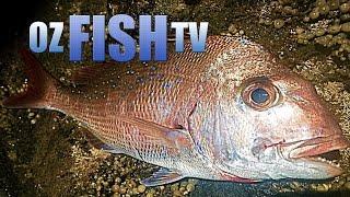 Corinella Australia  City new picture : Oz Fish TV Season 3 Episode 8 - Corinella Rock Fishing