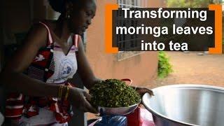 At Ouahigouya, in the north of Burkina Faso, Safiatou ROAMBA, 37 years, transforms moringa leaves into tea. At the beginning...