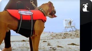 My Incredible Dog - Hanzo The Amazing Surfing Dog