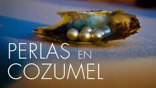 En la zona norte de la isla Cozumel una familia se dedica desde 2001 al negocio de las perlas cultivadas. La especie que se produce aquí es la pinctada radiata una perla que solo se da aquí y en el Golfo Pérsico. Pero la belleza de estas perlas cozumelañas radica sobre todo en las dificultades que esta familia ha atravesado para crear cada pieza.