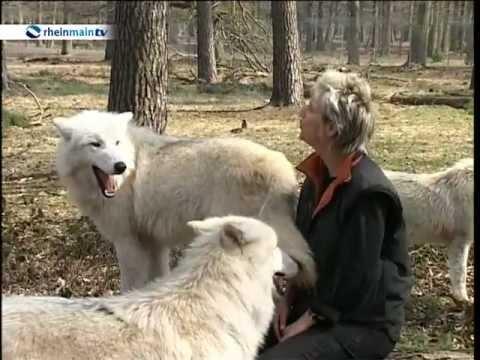 Hanau: Wildpark Hanau - 12. Wolfsheulnacht im Wildp ...