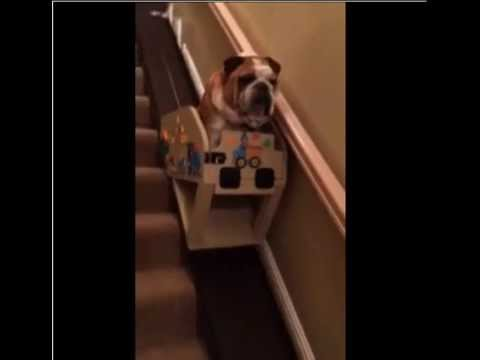 狗狗年紀大了無法上下樓梯了,於是主人幫牠做了這個!你看了也會感動!