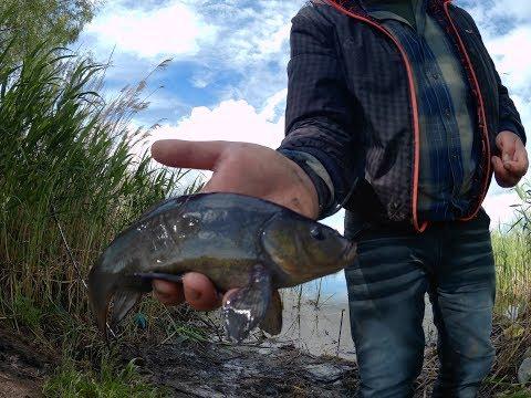 фильмы о рыбалке крупный карась