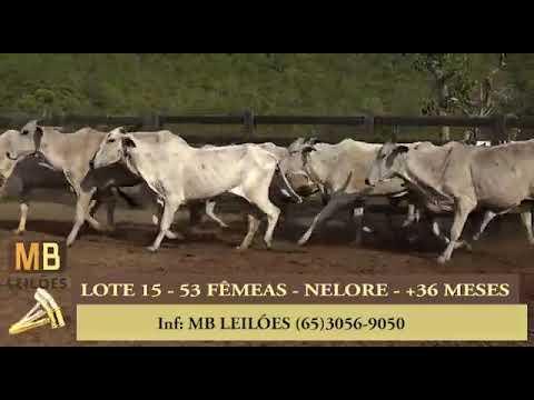 217º LEILÃO VIRTUAL MB LEILÕES