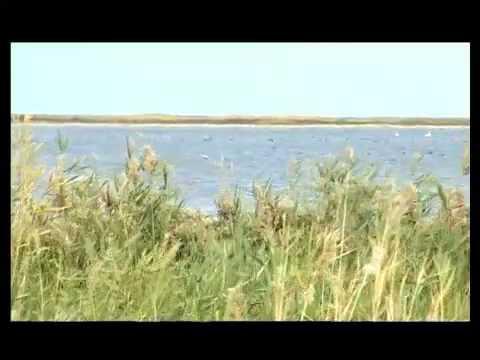 Спасение Аральского моря
