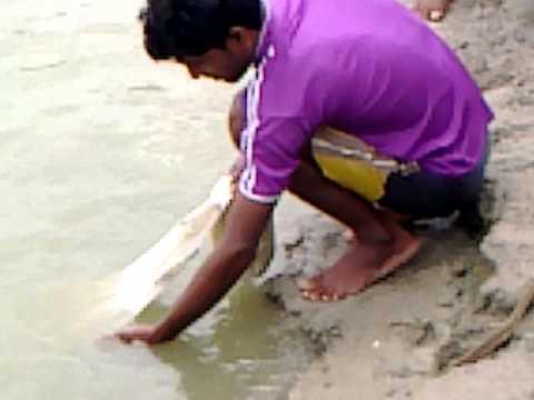 PRAWN FISHERY PURBAMIDNAPUR WEST BENGAL INDIA OWNER Mr  ANUP KUMAR MAITY