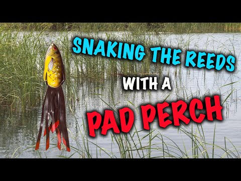 Snaking the Reeds with a Pad Perch.Snaking the Reeds with a Pad Perch.<media:title />