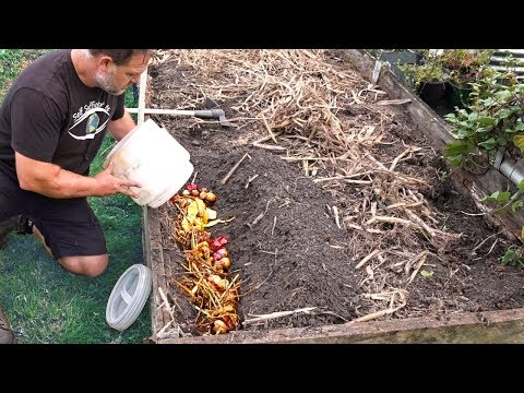 What Happens When You Bury Kitchen Scraps In The