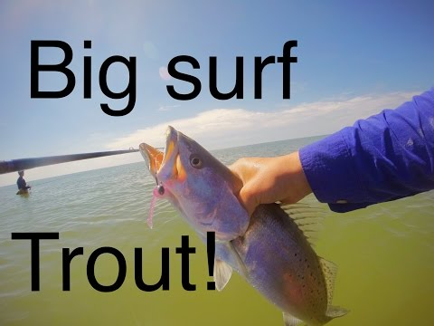 Big Speckled-Trout in southeast TX surf