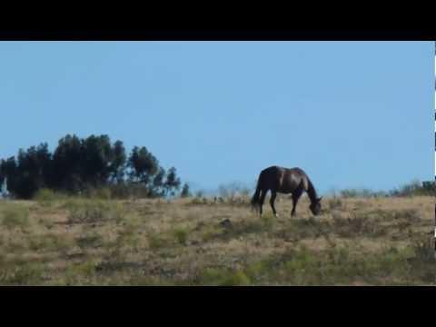 Horses-Palo-Alto