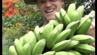 how-to-grow-harvest-bananas