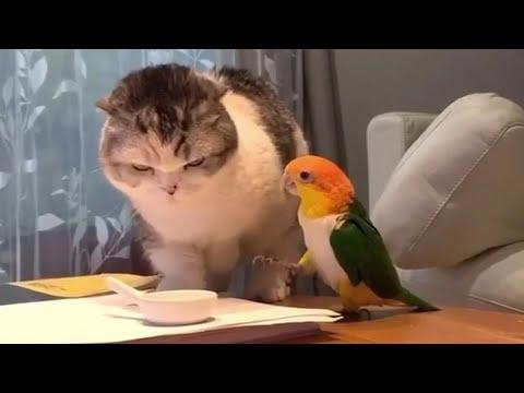 Kedilerin İnanılmaz Komik Halleri - Komik Kediler