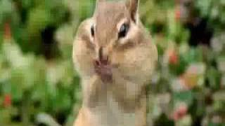 Funny animal voice overs