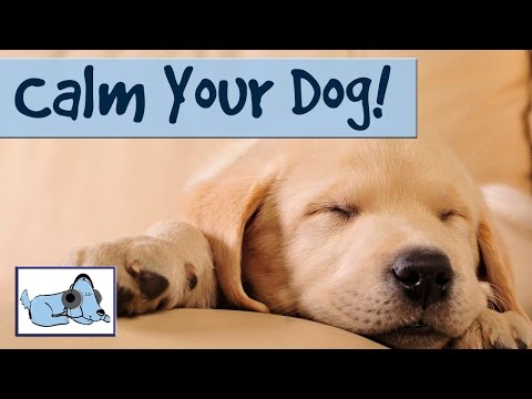 Music To Calm Down Your Dog And Stop Barking- Relax My Dog