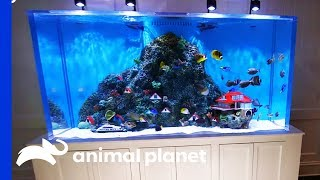 Building A Caribbean Themed Tank For NASCAR Champion Kurt Busch | Tanked by Animal Planet