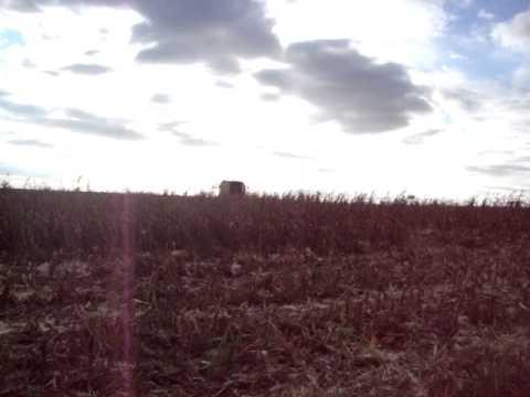 dia de colheita em cruzalia sp