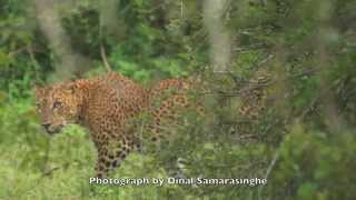 Yala Sri Lanka  City new picture : Yala National Park, Sri Lanka: 2014