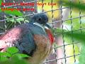 Exotic & Fancy Birds - Exotic&fancy Birds