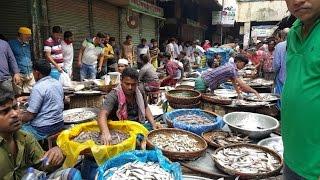 Incredible biggest Fish Market in Old Dhaka City Bangladesh. In this fish market has more 150 big big fish shop. All kind of Bangladeshi local fish and river fish ...