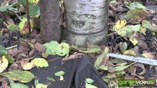 #1366 Obstbaumschnitt - Entfernen der Wildtriebe