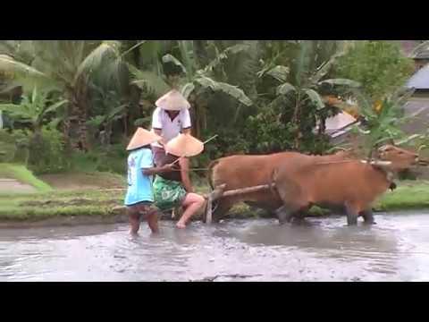 Het echte leven op Bali