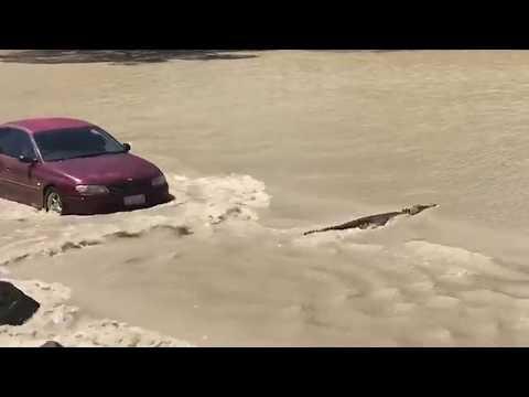 Suomessa porot tukkii tien – Australiassa krokotiili makaa tiellä