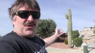 Saguaro Cactus by Urban Grower