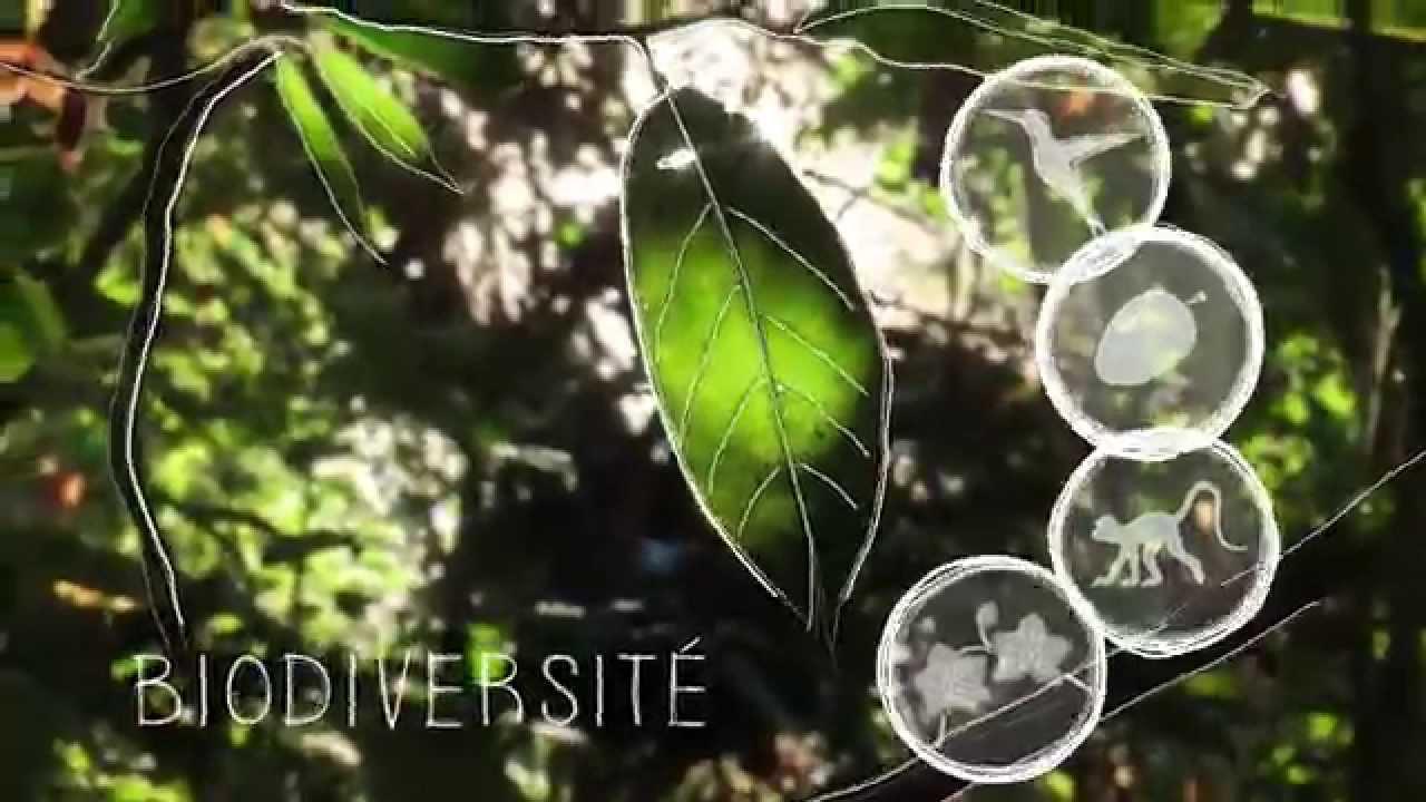 Film FFEM «Comment préserver les forêts tropicales»