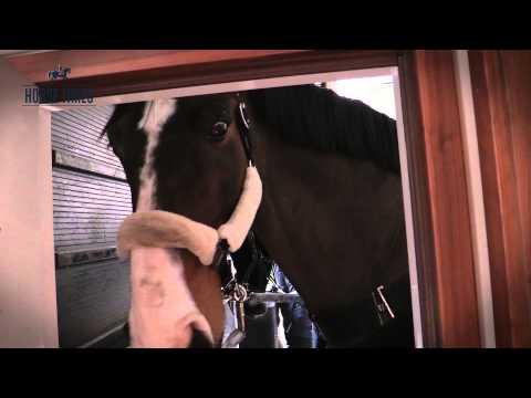 Коневоз - пятизвездочный дом для лошадей