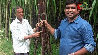 কালো আঁখ/ গেন্ডারি কুসর(black sugarcane)- পার্ট-০২