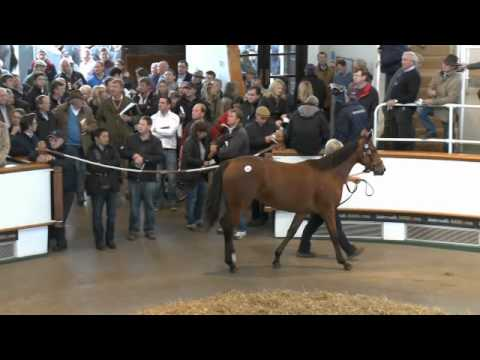 Tattersalls October Yearling Sale Book 1 Day Two 2012