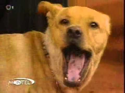 I Cried When I First Watched This Inspirational Dog