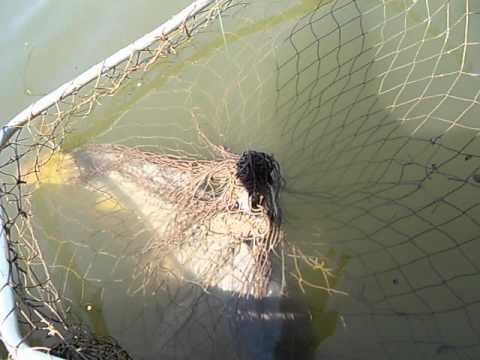 рыбалка днестр турунчук