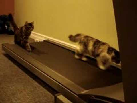 Funny Cats Running on Treadmill