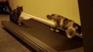 Kittens Exercising On Treadmill :))