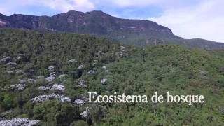 Boyacá es líder en ecosistemas de Bosque