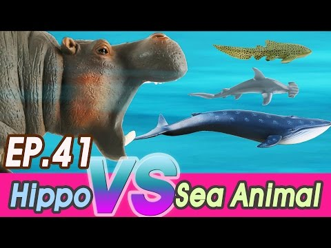 [EN] #41 Hungry hippo doesn't like Sea animals (kids education, Collecta figure) [cocostoy]
