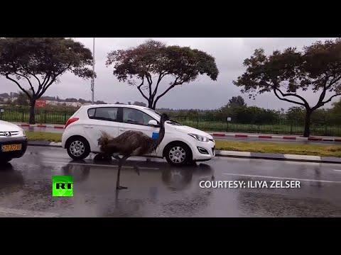 最詭異公路景象!驚見__狂奔,嚇壞所有駕駛!