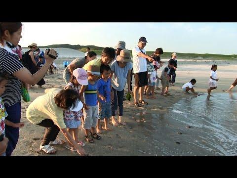 種子島の学校活動:西野小学校前之浜海岸でウミガメ放流体験2016年
