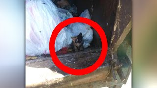 Woman Hears An Odd Noise In The Trash And Uncovers A Heartbreaking Sight by Did You Know Animals?