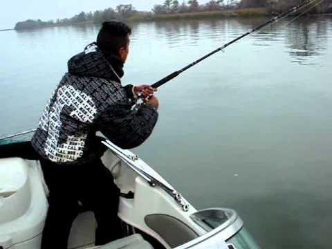 sturgeon fishn wit a broken handle reel 63inch sturgeon