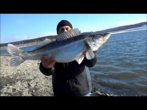 рыбалка видео судак крупный