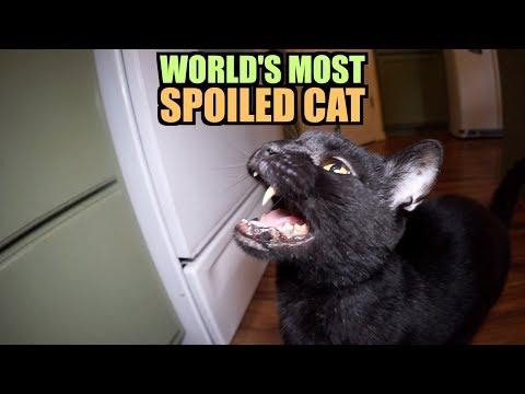Talking Kitty Cat - World's Most Spoiled Cat (видео)