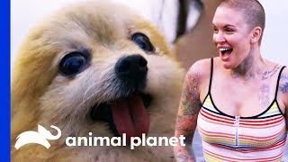Meeting Special Needs Dogs On Their Search For New Homes | Amanda To The Rescue by Animal Planet