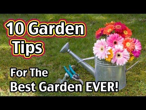 10 Garden Tips For The Best Garden EVER!