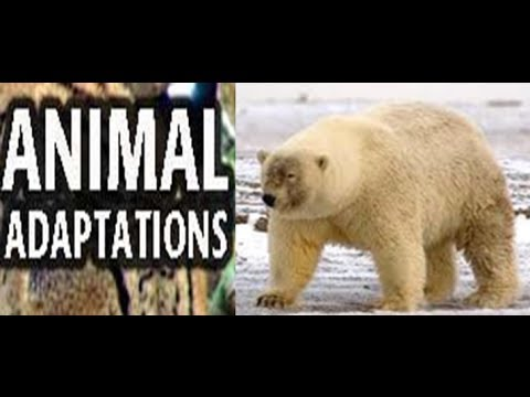 Animal  Adaptations for Kids -Lesson with Quiz