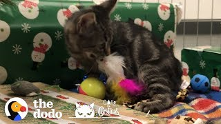 Shelter Kitten Gets All The Christmas Presents   The Dodo by The Dodo