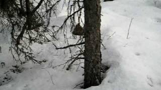 Gransfors Bruks Small Forest Axe video review